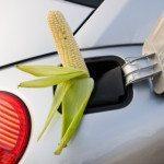 Biopalivo. Jak to je vlastně s řepkou?